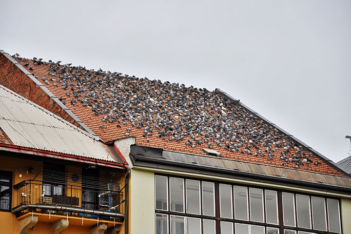 A2B Pest Control are able to install spikes to deter birds from roofs in Mottingham.