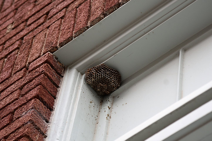 We provide a wasp nest removal service for domestic and commercial properties in Mottingham.